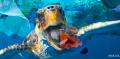 Destinação incorreta de lixo mata animais marinhos a 80 km de São Paulo